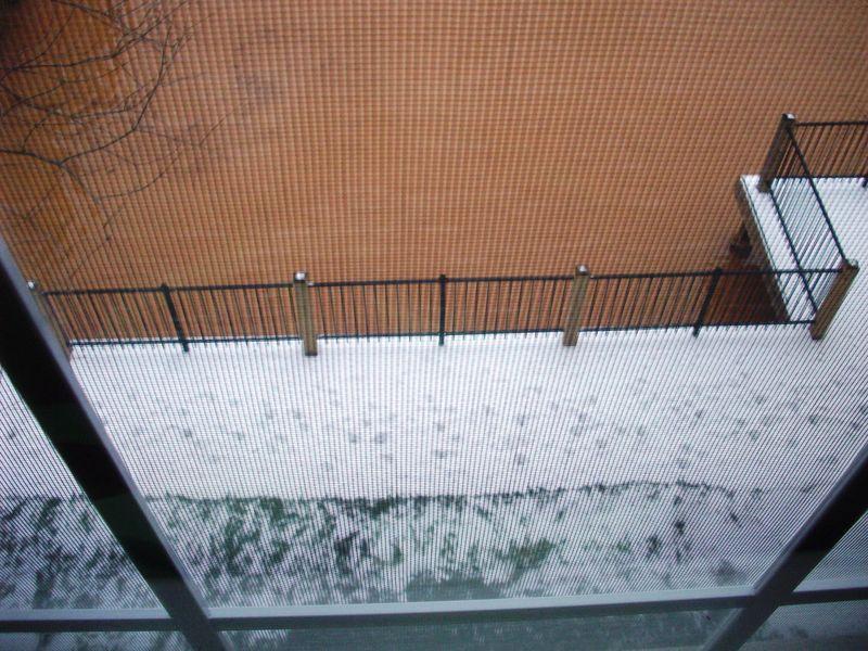 Snow'y saturday 023