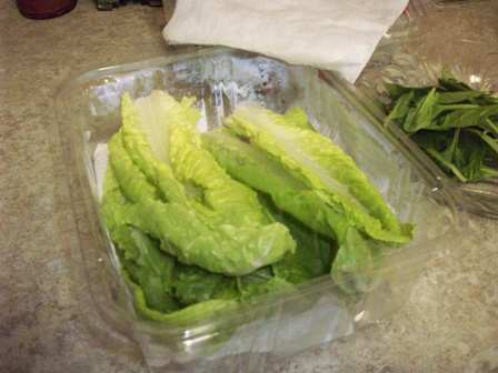 Keeping Salad Greens Fresh 004