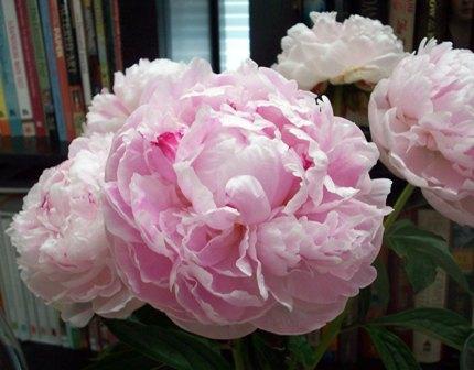 02. Pink Peonies