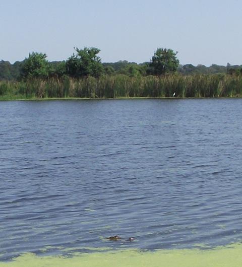 03. Watching the Gators