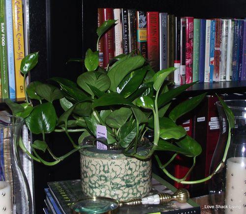 10. Green Plants