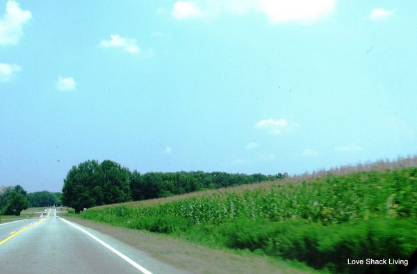 11. Corn Fields