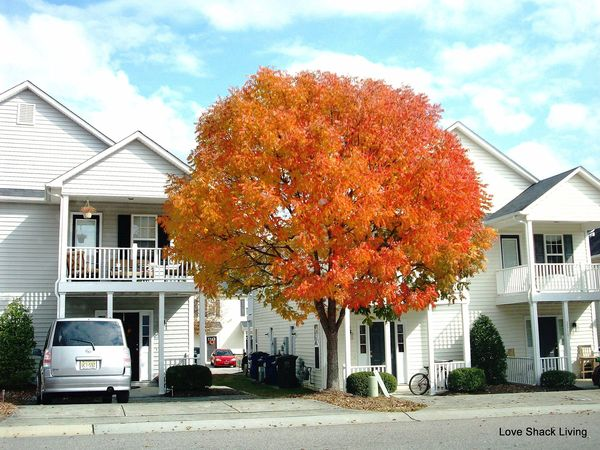 01. Orange Tree