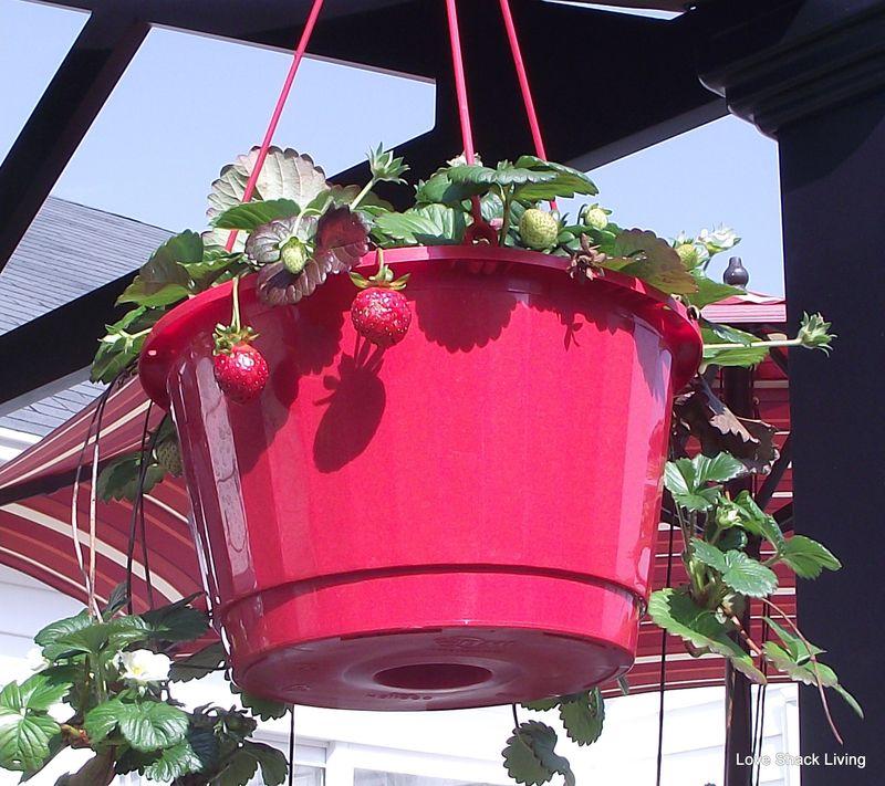 12. Nature's bird feeders