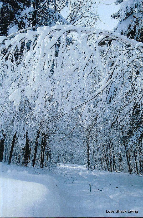 08. Belmont Snowy Driveway-1